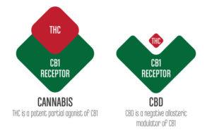 CBD Help With Sleep - CannabisTHCAmounts